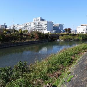 【野鳥観察・撮影】静岡県浜松市の街中の馬込川にて