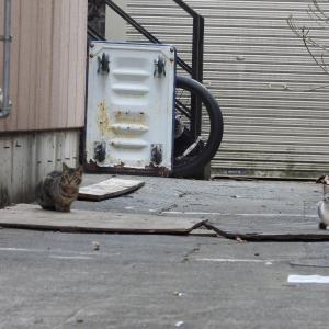 【浜松の猫ちゃん】今日はコロッケの日