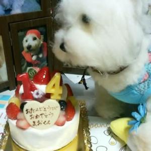魔王🐶の誕生日🎂
