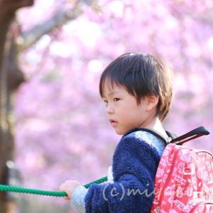 桜、梅、咲いてますよ!東山植物園 ルート案内
