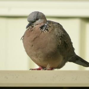 お庭のまんまる鳥さんとこの頃の話