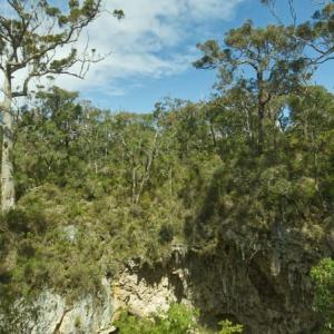 Mammoth Cave周辺の散歩道