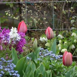春の雨・・・