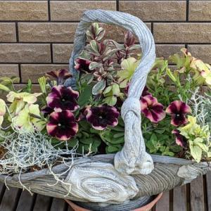 花籠の寄せ植え・・・