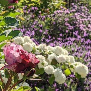 お庭が日に日に賑やかに・・・