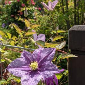 お花のパワー・・・