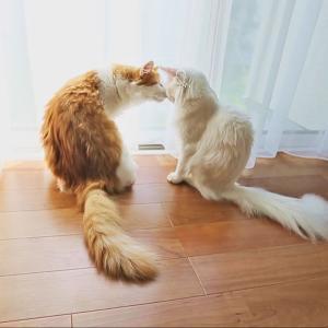 うちの猫はいやし猫だよ