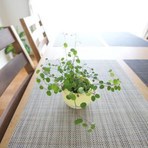観葉植物はいいね🍀