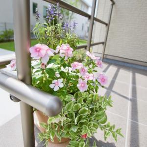 玄関先の花を撮ってみた!