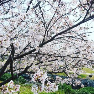 ●春休み最終日●