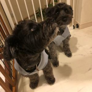 共働きで犬を飼う(クーリングベスト)