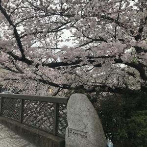 【エアお花見】コロナに負けないココロのために、桜を愛でましょう!語り合いましょう!