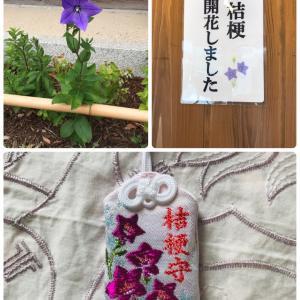 【晴明神社】桔梗守り 今年もいただいてきました!