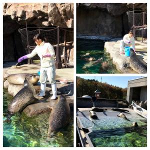 【旭山動物園】楽しく工夫された素晴らしい動物園だけど、お年寄りにはちょっとキツいかも(汗)