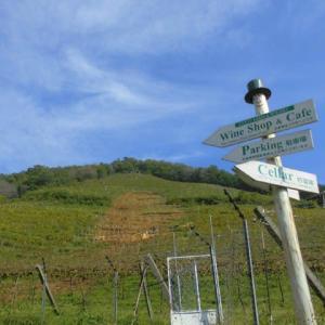 ココファームワイナリーの葡萄畑と、素敵なカフェやショップ。