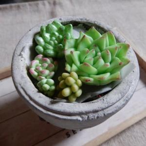 樹脂粘土で作った多肉植物、オオムラサキの森。