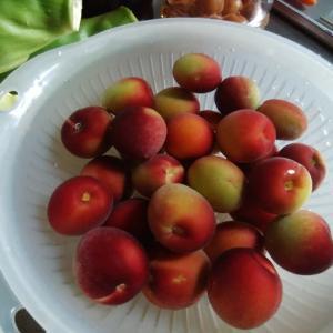 パープルキングという梅でシロップとジャム作りました。
