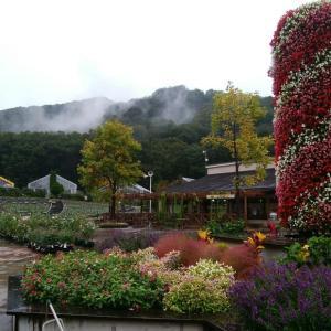 とちぎ花センター、ダースベイダーみたいな花。