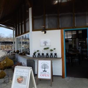 盆栽カフェの苔玉スイーツと、クレマチスミス東京。