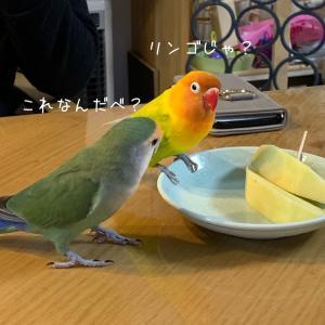危なかった〜(^◇^;)
