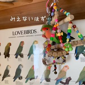 LOVE BIRDS ポスター