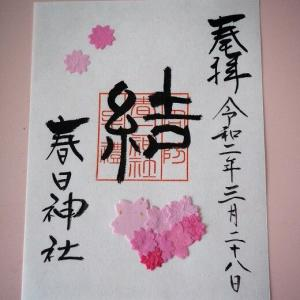 春日神社の桜御朱印(山口県防府市)
