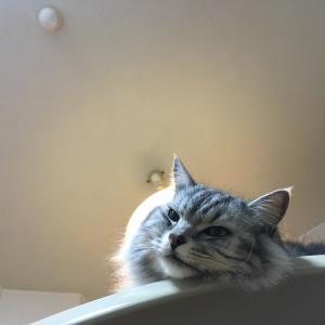 恋猫JILL