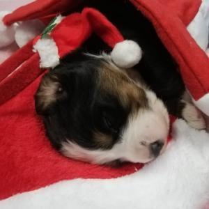 Merry Christmas💕💕💕