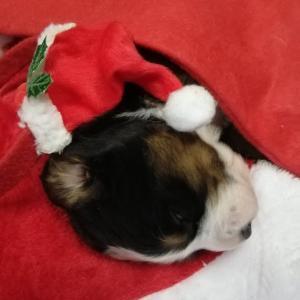 Merry Christmas~🎄🎅🎁✨