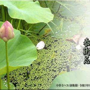第60回平泉芭蕉祭全国俳句大会