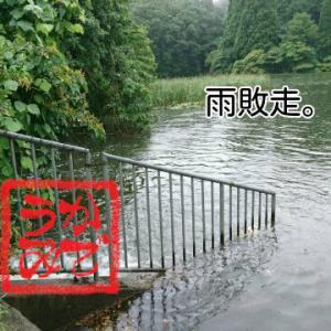 大雨で無理。