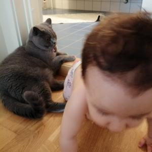 【海外で子育て】猫の息子と人間の息子。