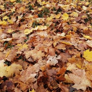 【オスロ】存分に秋を楽しむ散歩。