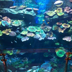お薦めされた水族館 Sea Life Bangkok Ocean World お値段がね