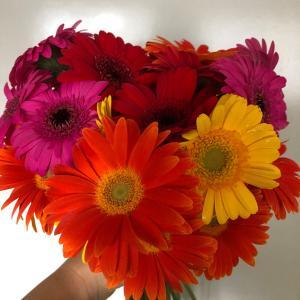 ビタミンカラーなお花から元気