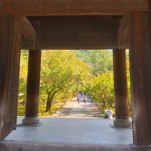 京都旅行のお土産は白い恋人