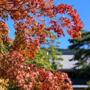 渋めな色で秋の花