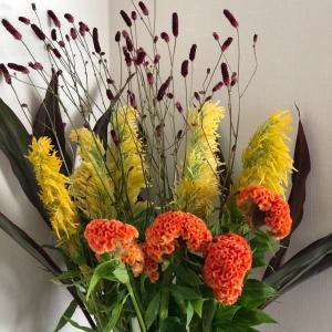 黄色とオレンジのケイトウで秋