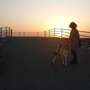 【「三密」を避けて海岸を夕方散歩】