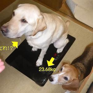 【オレオとクッキーの体重】