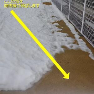 【マイドッグランで5ワンズが雪遊び Vol.1 ~前編(3ワンズ)~】