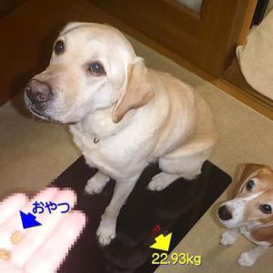 【オレオとクッキーの体重】&【久しぶりに出現!! 4/12の『夜の蜃気楼』】