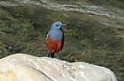 今年初の一人探鳥ー相模川中流