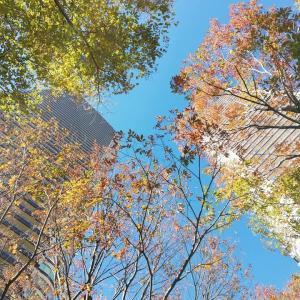 武蔵小杉の紅葉とあっという間に高くなったKOSUGI 3rdアベニュー
