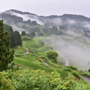 ヤマセミに会いに行ったら~ おまけ ²/松之山2020年7月5日