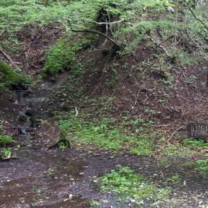 1年振り… 山中湖『大洞の水場』で想ふこと。