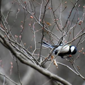 工房裏のエサ台に来る野鳥たち、2020年11月1日/vol.2