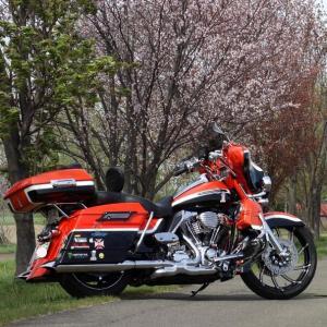 AMチャリ(ロードバイク)、PMハーレー、〆はわんことお花見散歩の巻