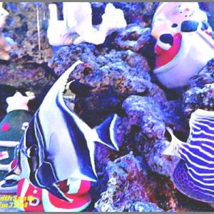 image3294 熱帯魚も師走