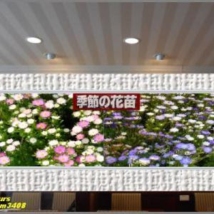 image3408 花売り場の小花たち